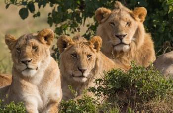 No reino animal