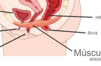 Fortalecer o assoalho pélvico ajuda a melhorar a vida sexual e evitar doenças